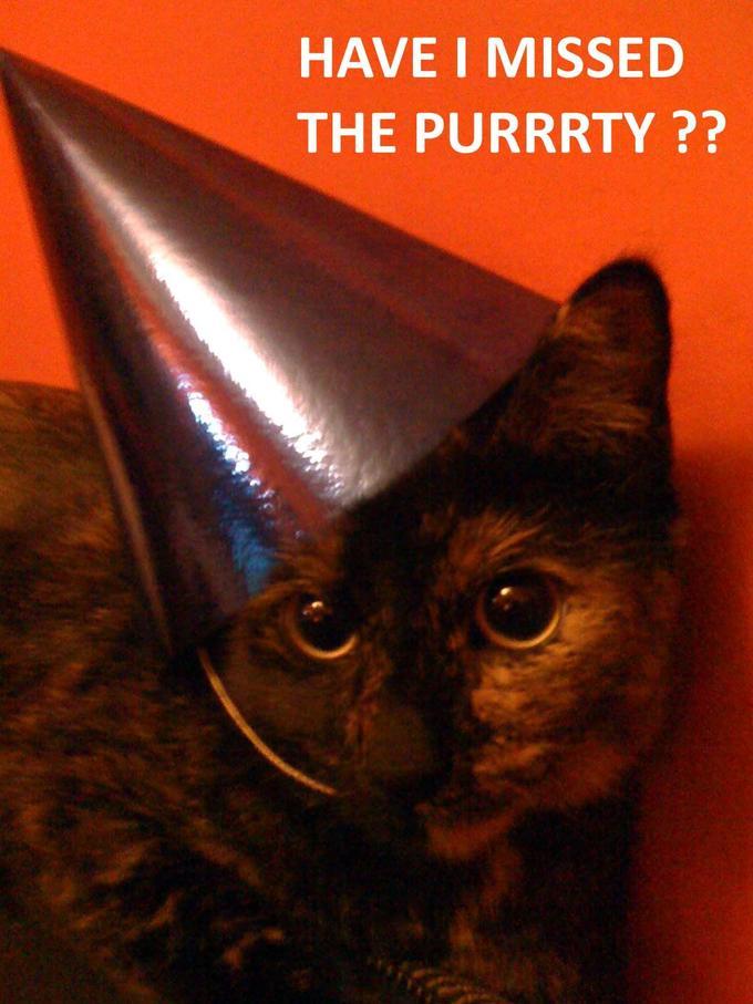 Purrtty_Cat.jpg