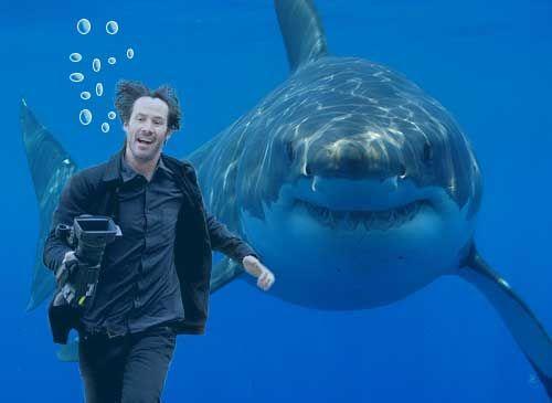 hkr-shark.jpg