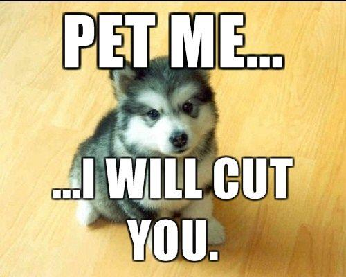 pet-me-i-will-cut-you.jpg