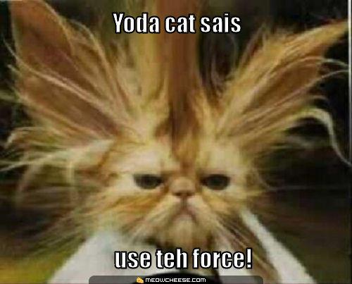 yoda-cat-sais-use-teh-force-.jpg