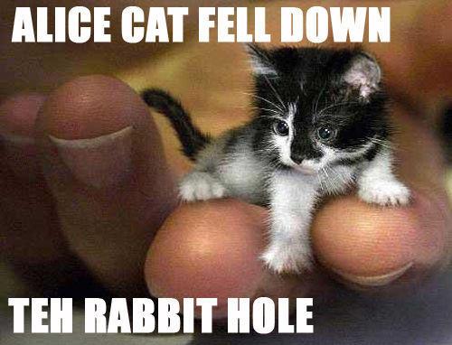 alice-cat-fell-down-teh-rabbit-hole.jpg