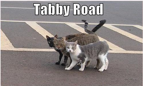 ihasafunny-funny-pictures-beatles-cats-street.jpg