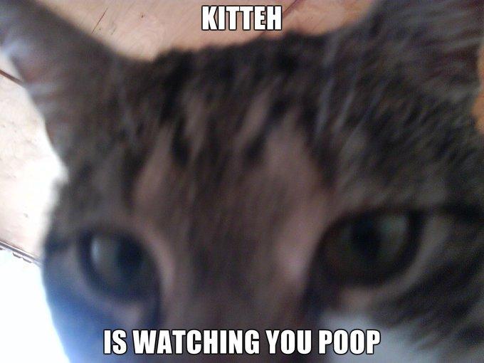 Kitteh-is-watching-you-poop.png