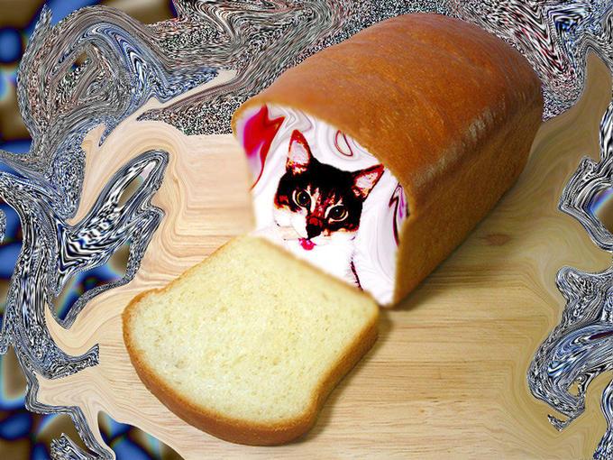 cat_bread_by_fuckingcats-d2ze8dd.jpg