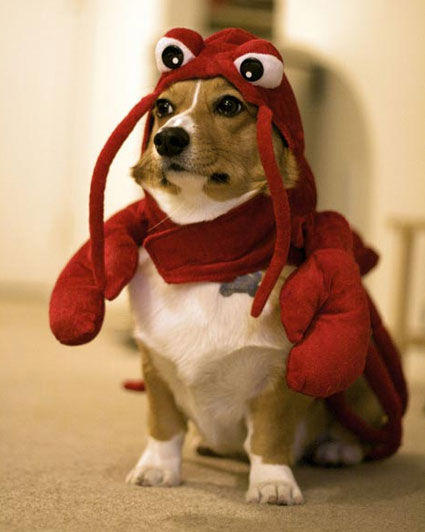 lobster-dog-030110-main.jpg
