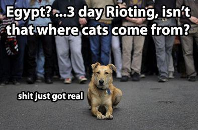 riotdog.jpg