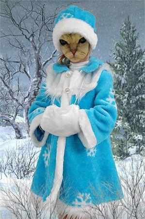 Limecat_in_Winter.jpg