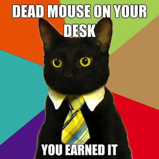 business-cat-03.jpg