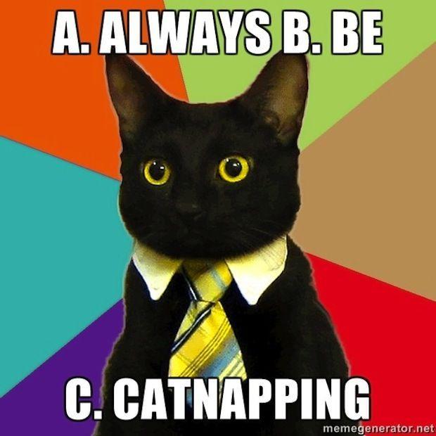 business-cat-06.jpg