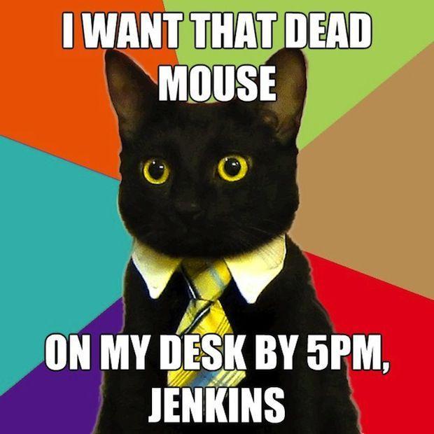 business-cat-10.jpg