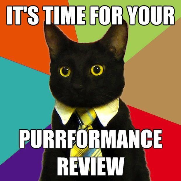 business-cat-14.jpg