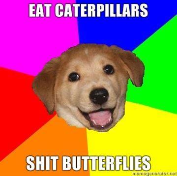 Eat-caterpillars-Shit-Butterflies.jpg