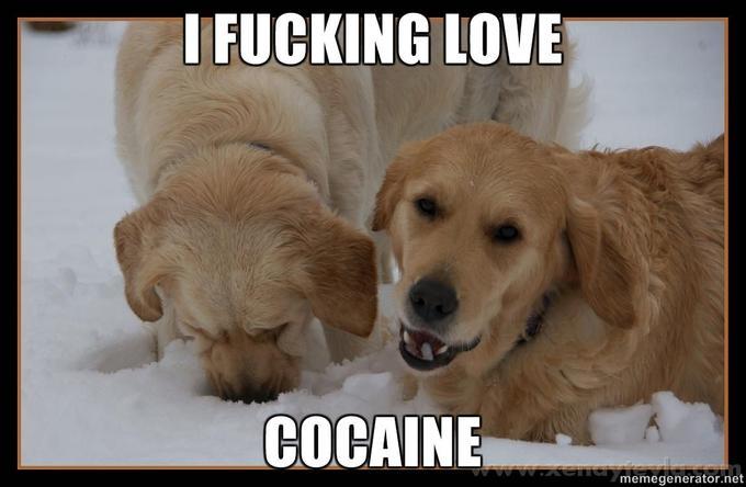 I-FUCKING-LOVE-COCAINE.jpg