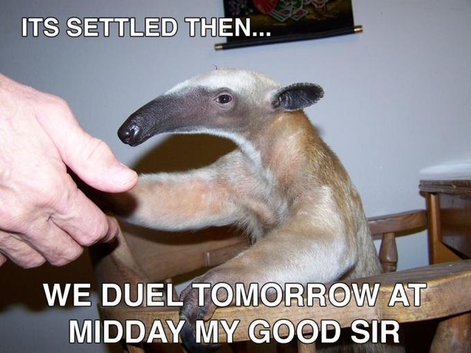 anteater_duel.jpg