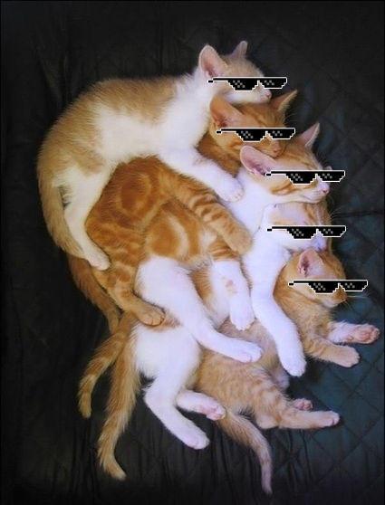 dwicats.jpg