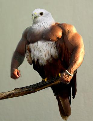 [Image: BirdsArms1.PNG]