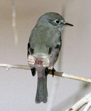birdse.jpg