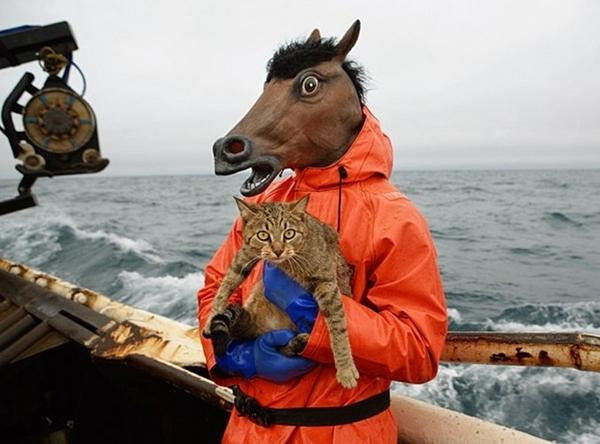 horse-with-cat-on-boat-in-storm-5907-1238034615-27.jpg