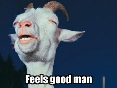 feels-good-man-goat-squint-12883904505.jpg