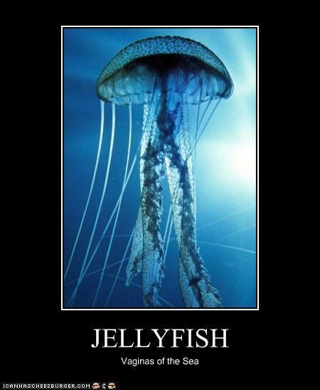 Jellyfish_Demotivational_Postr_by_Red_Rum_18.jpg