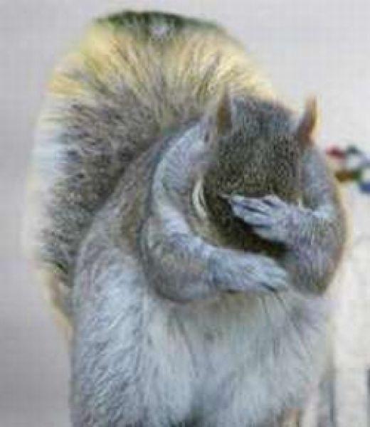 squirrelfacepalm.jpeg