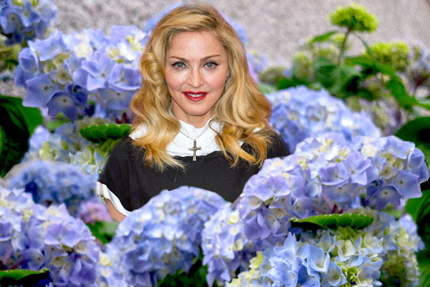 madonna-hates-hydrangeas.jpg