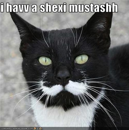 funny-pictures-cat-has-moustache.jpg