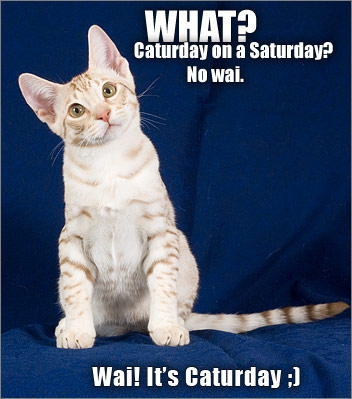 080614-caturday-on-saturday.jpg
