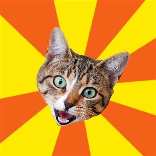 bad-advice-cat.jpg