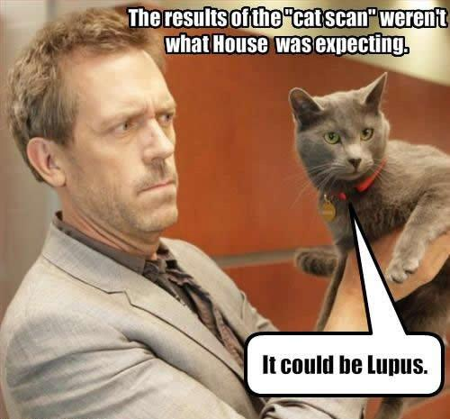 lupus-house-cat.jpg