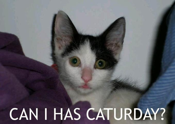 CAT-01.jpg