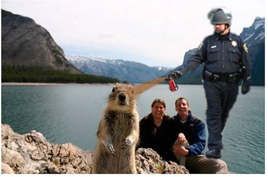cop_sprays_crasher_squirrel.jpg