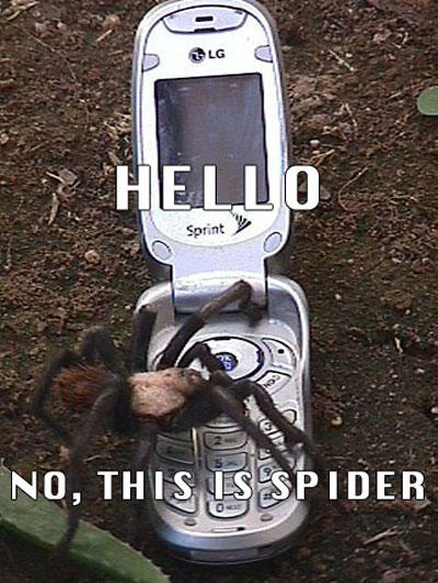 this-is-dog-spider.jpg