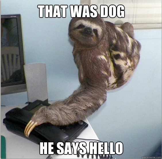 Funny Meme Hello : Image yes this is dog know your meme