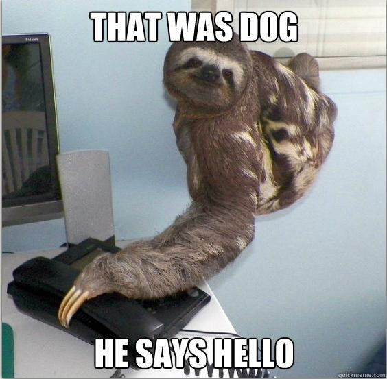 yes dog meme - photo #9