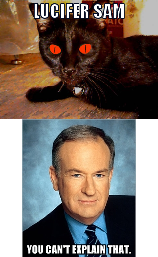 That Cat's Something Bill O'Reilly Can't Explain