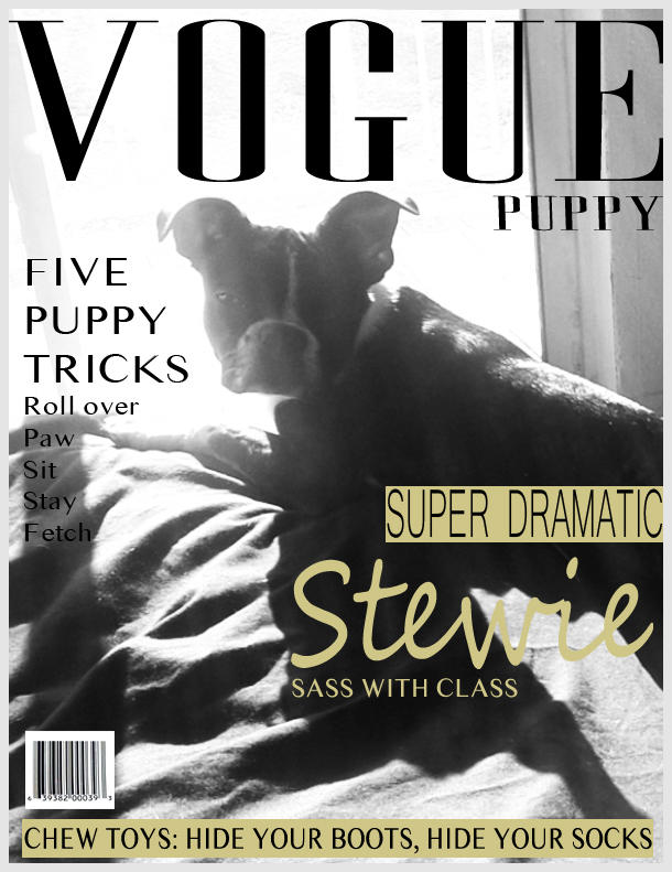 Puppy Vogue: Stewie Photo Shoot