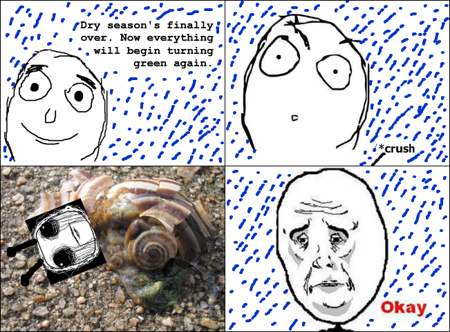Not a Good Season for Snails