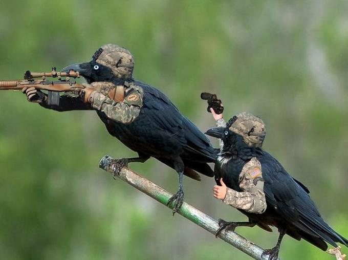 Sniper team Crows