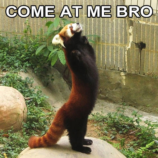 Come at me bro! Red Panda edition.
