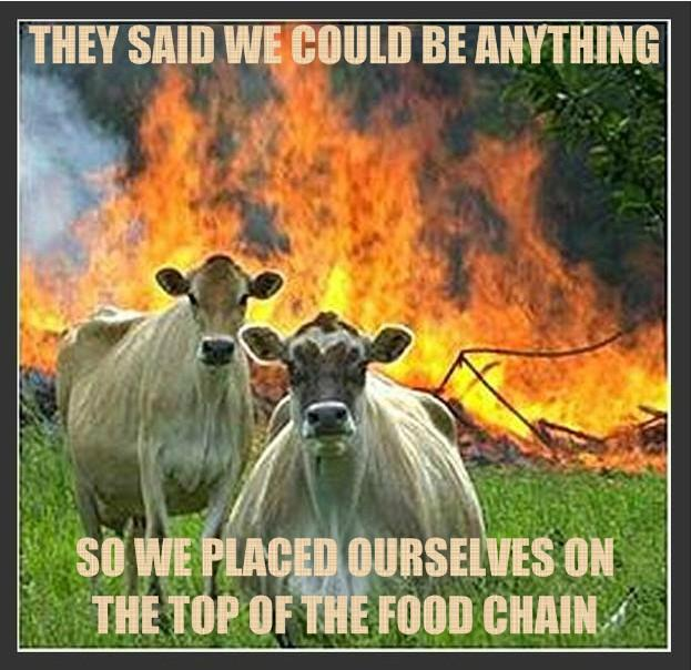 Evil Cows and Food Chain