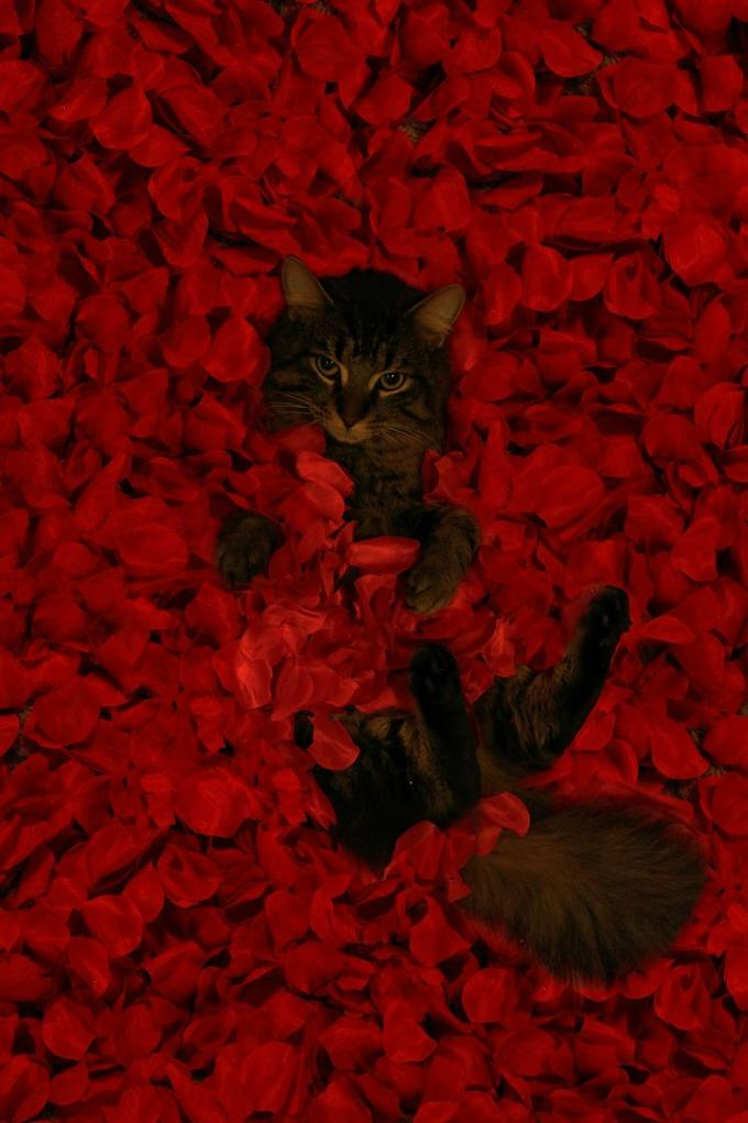 Film Scene Cat: American Beauty