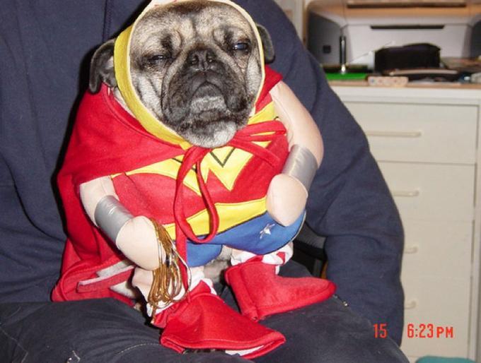 Sleepy Dog Cosplays Wonder Woman