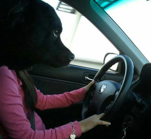 Bitch driver