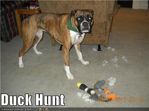 duck hunt dog IRL