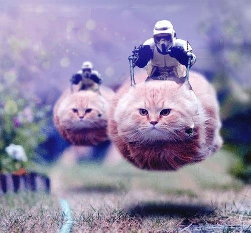 Riding the Speeder Cat