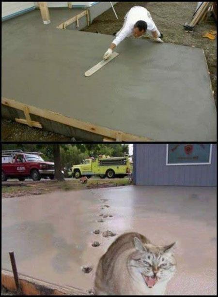 A Cat's Revenge