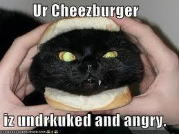 you mean i said im a cheezburger