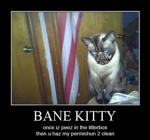 Bane Kitty's Litter