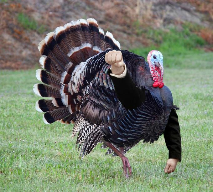 Anders behring turkey breivik